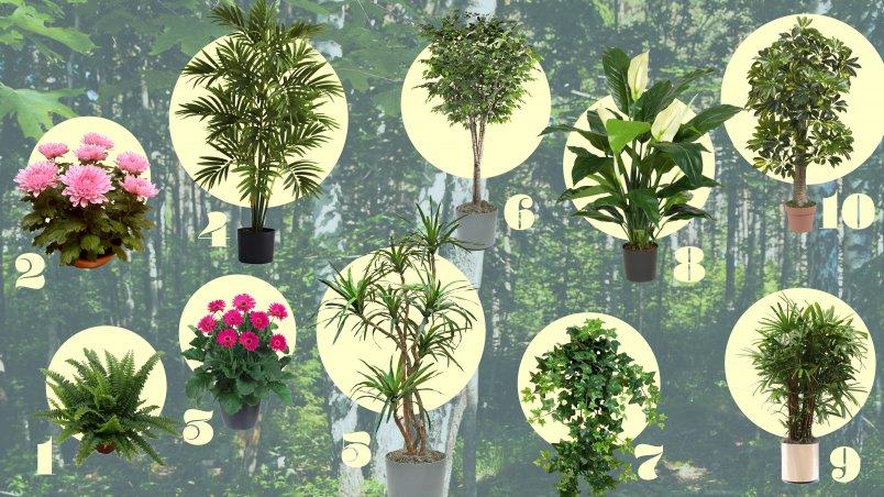 Van deze 10 luchtzuiverende planten ga je beter en gezonder slapen - &C