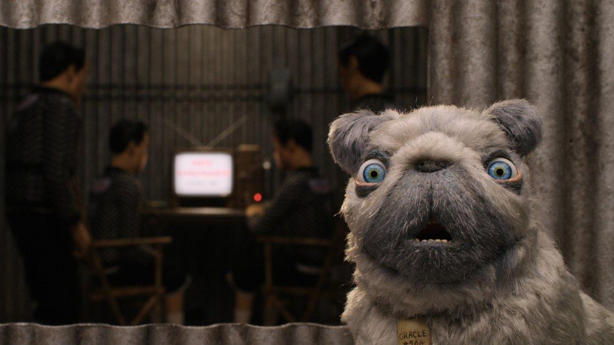 In rotterdam kan je nu samen met je hond naar de bios c for Bios rotterdam