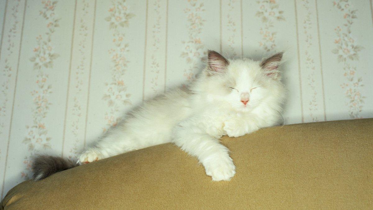 Seks kattenstandje