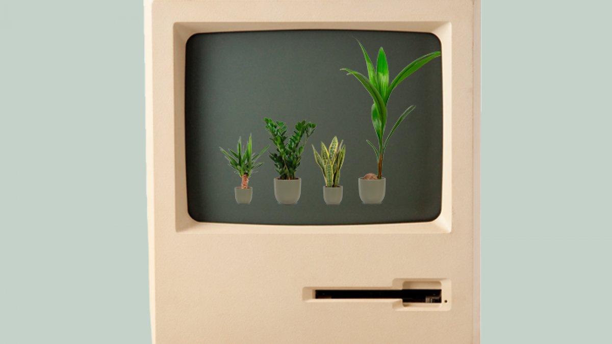planten webshops