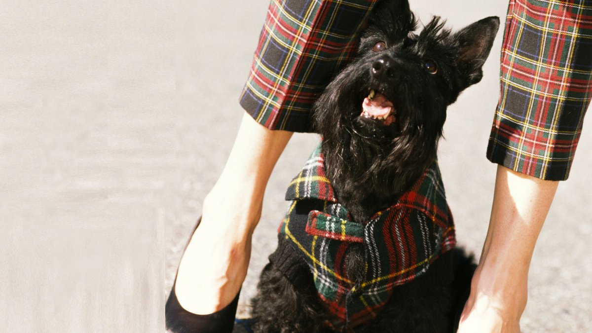 H&M matchende trui met hond