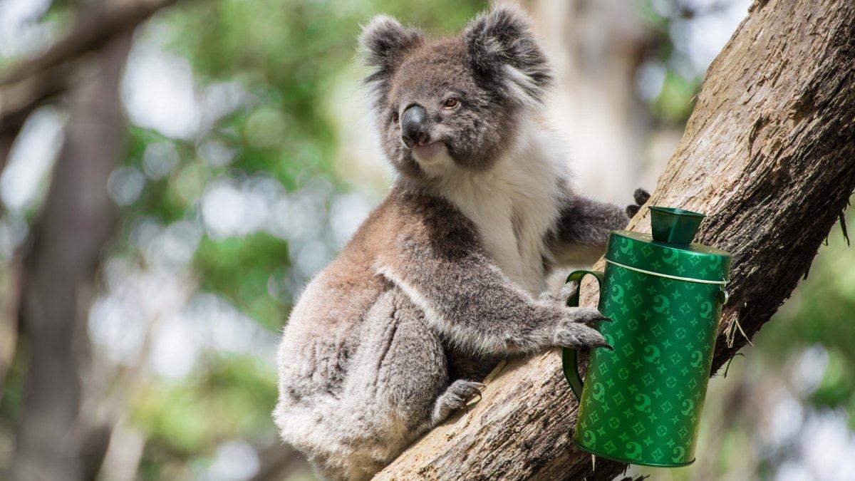 Celebs doneren aan Australië