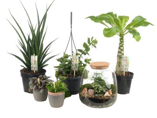 Waarom planten in huis
