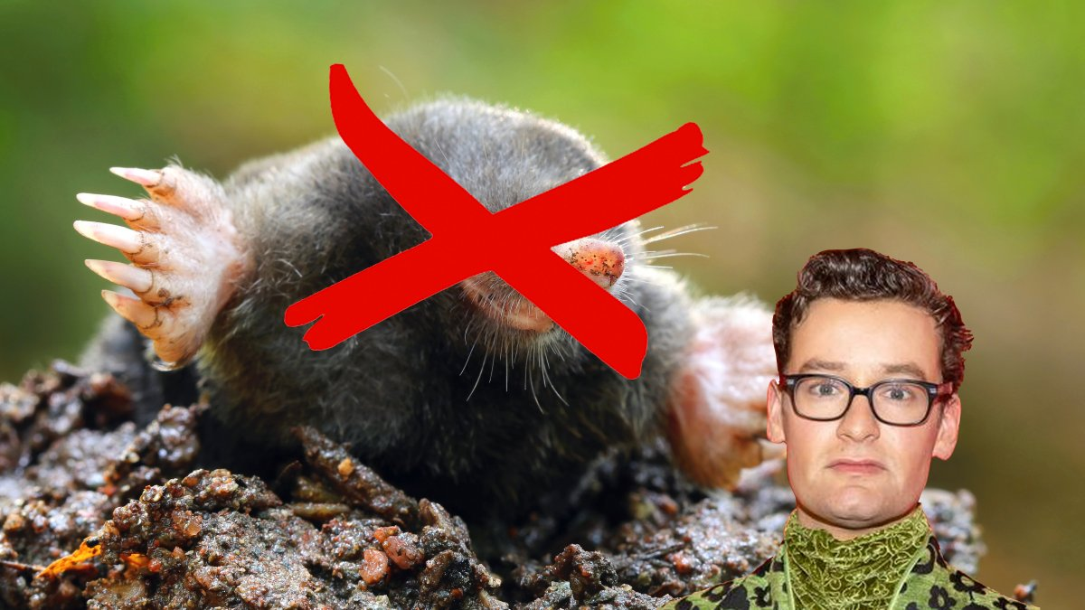 Wie is de Mol? Splinter